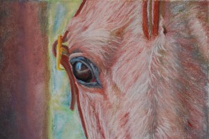 """Charm"" - Pastel on illustration board. ""This is a horse we used to own that had the craziest eyes!"""