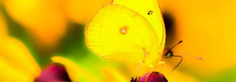 "Poem: ""butterflies and dragonflies"" by lynn mac donald"